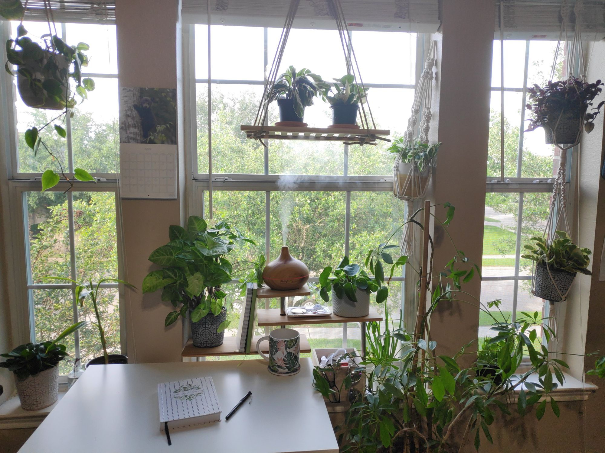 Tropical plants enjoy the bright indirect light of a large Eastern window, with high humidity