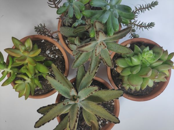 Picking the Right Pot for Your Houseplant